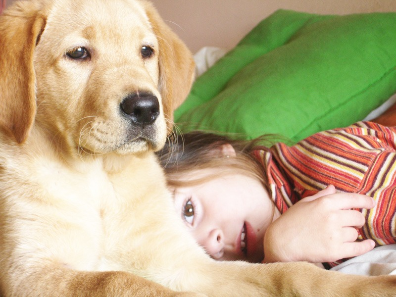 Top 10 Reasons to Use All-Natural Pet Products 2