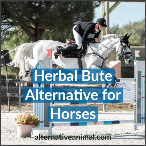 Herbal Bute Alternative for Horses