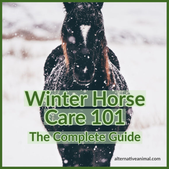 winter horse care 101
