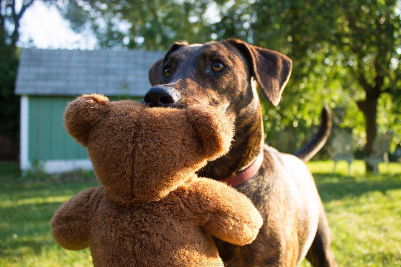mika-with-bear.jpg