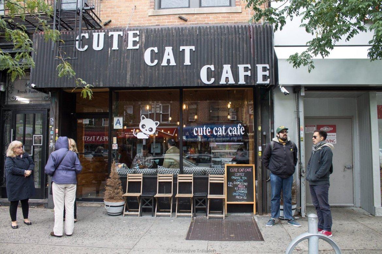 Cat Cafe in Queens