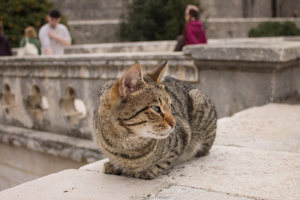 cat on wall in Dubrovnik