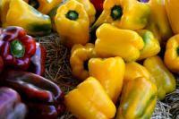 6 potravit_papriky