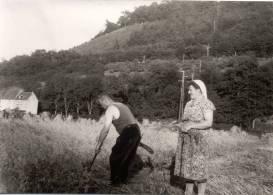 Getreideernte in der Au 1948 Johann und Luise Junior