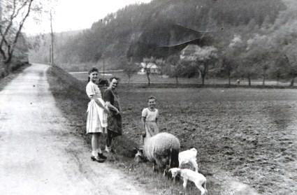 """Schafe hüten auf der anderen Wiedseite """"Am Mühlenberg"""" Ende 1930er Jahre"""