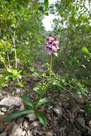 2012-04-28-Pont_Ponadieu-USC_Drap-IMG_8675-la