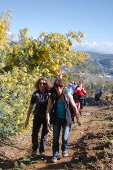 2014-03-02-Altiplus-Pegomas-Tanneron-Mimosa-Joelette-IMG_4197