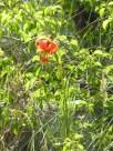 2014-06-08-Altiplus-Vescagne-Photos_Chantal-21