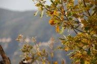 2014-11-23-Altiplus-Clans_Ste_Anne-IMG_7610