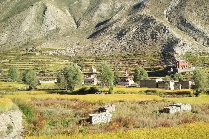 La famine menace aux confins de l'Himalaya népalais !