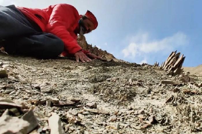 Des feuilles de palmiers vieilles de 20 millions d'années retrouvées dans l'Himalaya