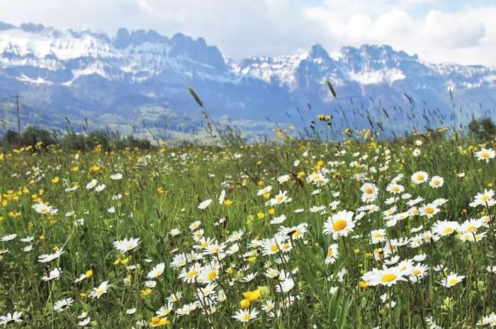 De magnifiques paysages de montagne pour un shot de bonheur !