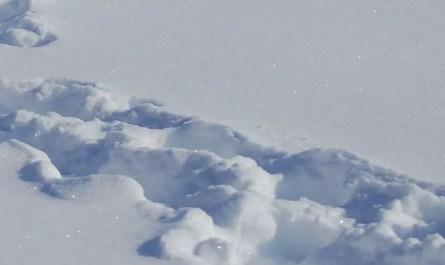 traces neige profonde