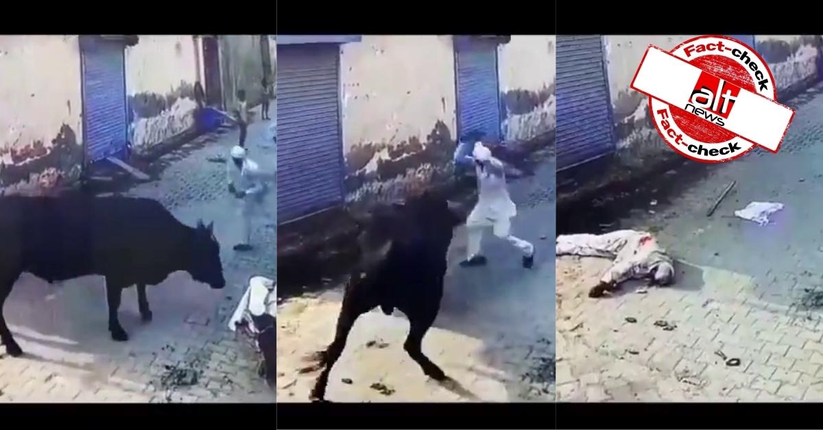 बैल द्वारा मारे गए बुज़ुर्ग का वीडियो सांप्रदायिक दावे से शेयर, मृत बुज़ुर्ग मुस्लिम समुदाय से नहीं