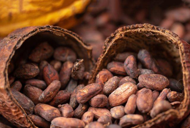 Chocolateros van al rescate del cacao mexicano | Alto Nivel
