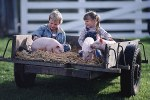 Maiale, fattoria, bambino