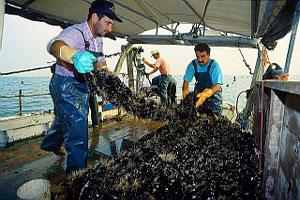 Pescatori, pesca, peschereccio