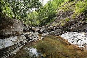 Foresta, area protetta, ambiente, bosco