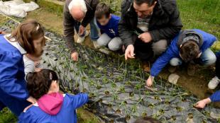 """Alunni e nonni davanti a una coltivazione di """"Orto in condotta"""" in una scuola"""