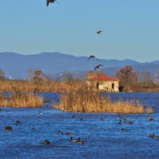 Il lago della Gherardesca
