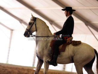 Cominciata la 50esima Mostra Nazionale del Cavallo di Città di Castello