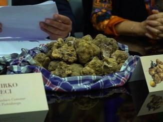 A Pietralunga edizione 'Straordinaria' della mostra mercato del tartufo