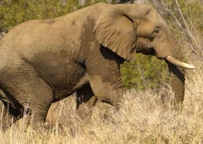 elephant-bull-in-pilanesberg