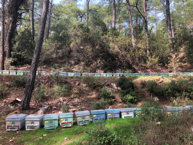 Hives-in-forest-turkey