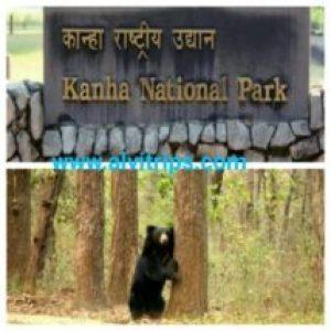 कान्हा नेशनल पार्क के सुंदर दृश्य