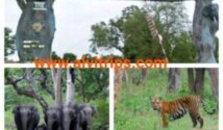 बांदीपुर नेशनल पार्क जीप सफारी और जंगल में ट्रैकिंग का आनंद