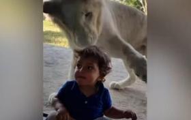 شاهد.. طفل شجاع يثير أعصاب أسد في دبي