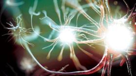 كيف تموت الخلايا البشرية وأين تذهب بعد موتها ؟