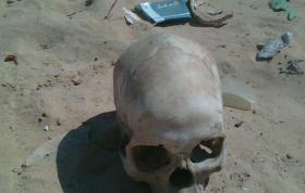 جمجمة تعيد تاريخ البشرية لنحو 210 ألف سنة