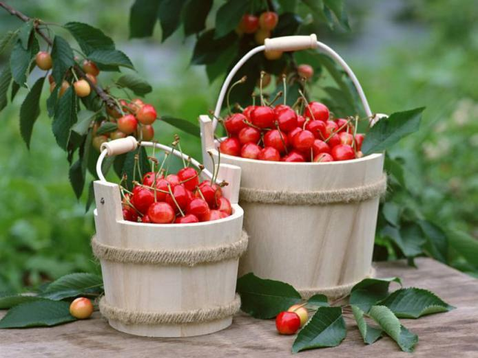 لماذا نجنب الأطفال تناول ثمار الكرز؟