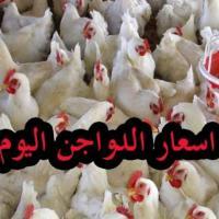أسعار الدواجن واللحوم الطازجة في أسواق غزة اليوم - سعر كيلو الدجاج