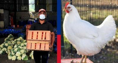 أسعار الخضروات والفواكه والدجاج في أسواق غزة اليوم السبت