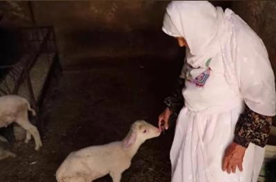 أم محمد.. سبعة عقود في تربية الأغنام (شاهد اليوم)