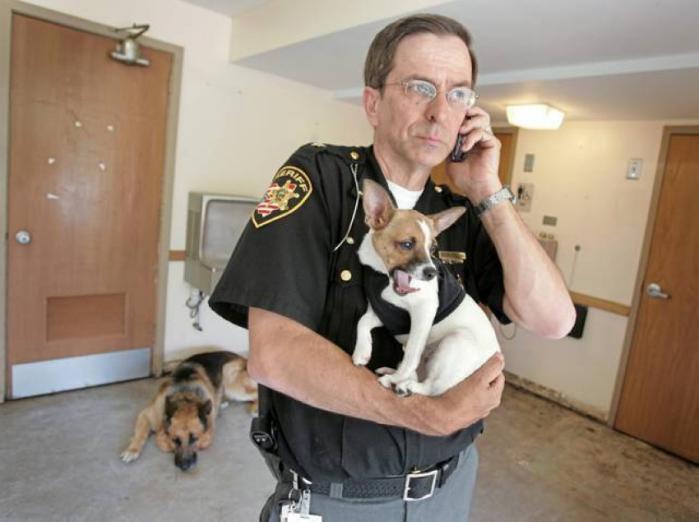 كلب يفارق الحياة بعد ساعات من وفاة صاحبه