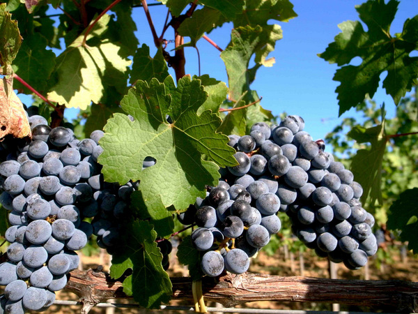 7 best red wine tours in italy