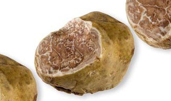 Italian White Alba Truffle