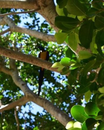San Diego Zoo : Birdie!