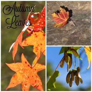 autumn-leaves-images-pack-listing