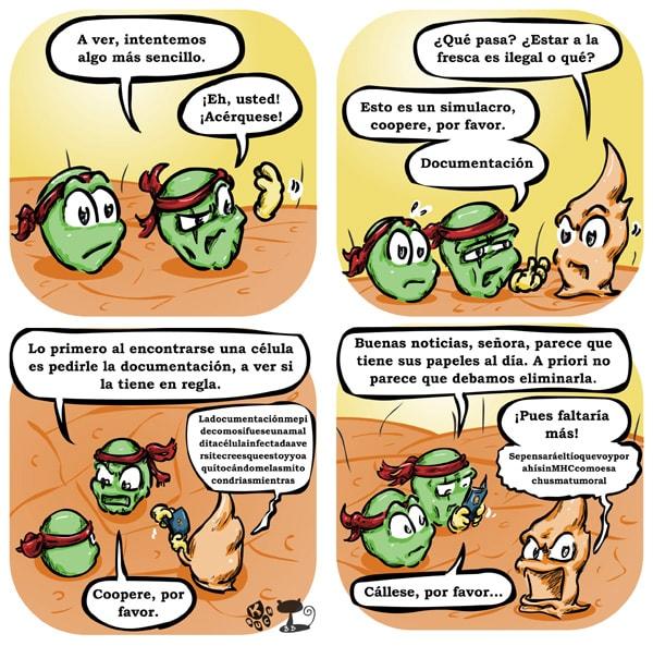 Células NK pidiendo MHC a célula epitelial
