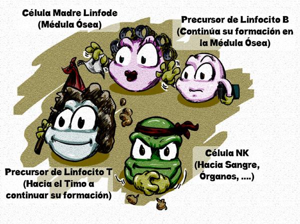 Origen de cada precursor linfoide.