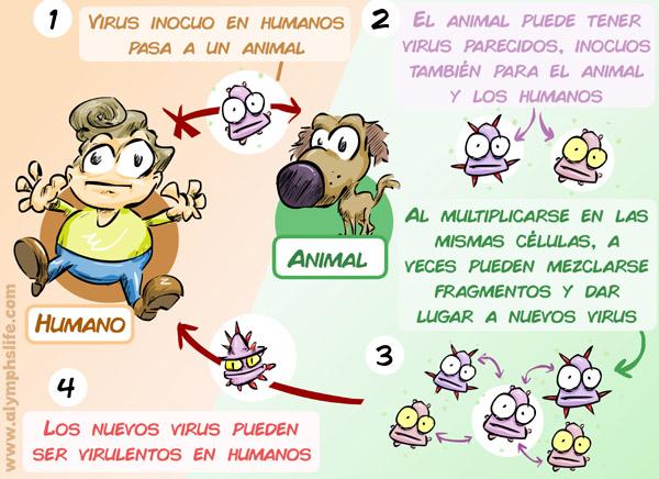 Explicación zoonosis y combinación de cepas