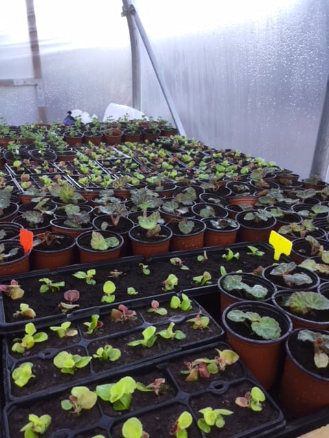 Growing Plants in the Greenhouse