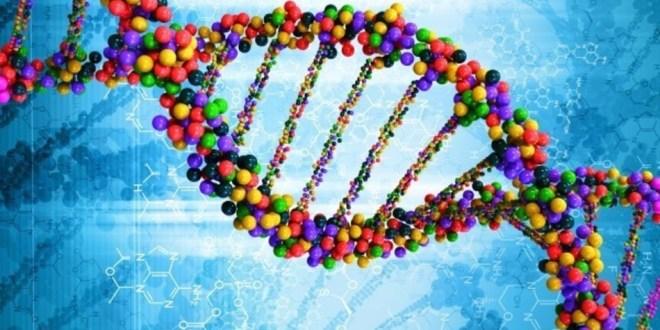 دراسة تكشف أن هناك علاقة بين فقد الكروموزوم y والإصابة بمرض الزهايمر
