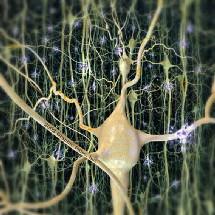 neuronasss-165499-225943