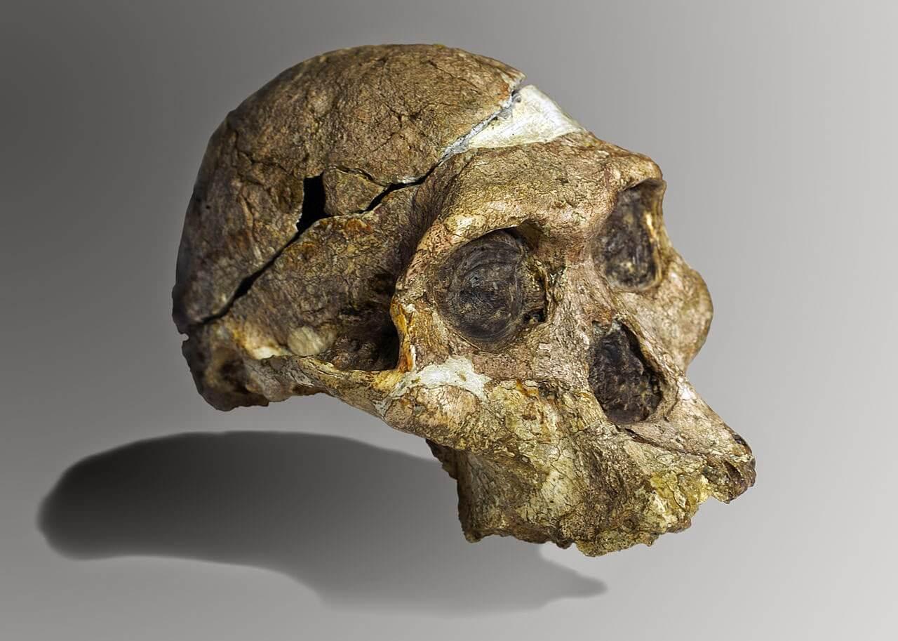 La evolución de nuestro cráneo y la enfermedad de Alzheimer… - Blog ...