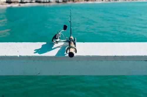 Alimentos y memoria - pescado azul - fishing-7474602_640